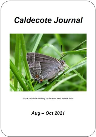 Image of journal cover